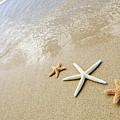 Seastars On Beach by Mary Van de Ven - Printscapes