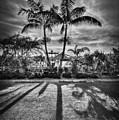 Shadow Waltz by Evelina Kremsdorf