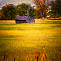 Shed In Sunlight by Marilyn Hunt