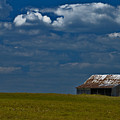 Shed In The Light by Susan Yates