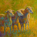 Sheep Trio by Marion Rose