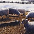 Sheepish by Denny Bond