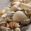 Shellfish Shells by Bernard Jaubert