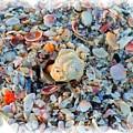 Shells by Judy  Waller