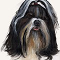 Shih Tzu by Jimmie Trotter