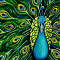 Shimmering Feathers Of A Peacock by Elizabeth Robinette Tyndall