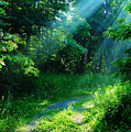 Shining Light by Thomas R Fletcher