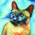 Siamese Cat by Christy  Freeman