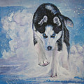 Siberian Husky run Print by Lee Ann Shepard