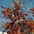 Sierra Juniper by Donald Maier