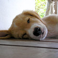 Sleepy Jojo by Barbara Marcus