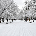 Snow Covered Benches And Trees In Washington Park by Shobeir Ansari