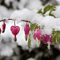 Snow Heart by Terry Walters