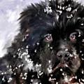Snow Play by Jai Johnson