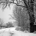 Snowy Branch Over Country Road - Black And White by Carol Groenen