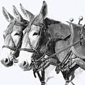 Sorrel Mule Team by Bethany Caskey