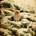 Sparrow In Winter II - Textured by Angie Tirado