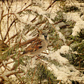 Sparrow In Winter Iv - Textured by Angie Tirado