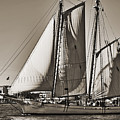 Spirit Of South Carolina Schooner Sailboat Sepia Toned by Dustin K Ryan