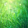 Spring Green Grass by Dirk Wüstenhagen Imagery