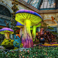 Spring Mushrooms by Stephen Campbell