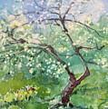 Spring Plum by Elizabeth Carr