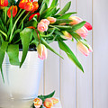 Spring Tulips On An Old Bench by Sandra Cunningham
