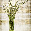 Spring Vase by Elena Elisseeva