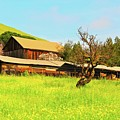 Springtime Barn San Francisco Bay by Gus McCrea