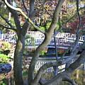Springtime Bridge Through Japanese Maple Tree by Carol Groenen
