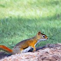 Squirrel In The Park by Jeff Kolker