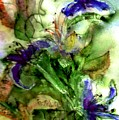 Starflower by Anne Duke