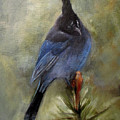 Stellar Of A Bird by Mary St Peter