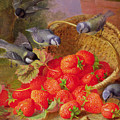 Still Life With Strawberries And Bluetits by Eloise Harriet Stannard