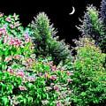 Still Of The Night by Will Borden