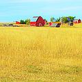 Storybook Farm by Theresa Tahara