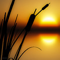 Summertime Whispers  by Bob Orsillo