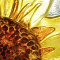 Sunburst Sunflower by Jerry McElroy