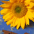 Sunflower And Skeleton Key by Garry Gay