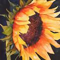 Sunflower by Karen Stark