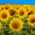 Sunflowers In The Field by Jeff Kolker