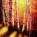 Sunlight Through The Aspens by David G Paul