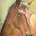 Sunlit Horse by Patricia Pushaw