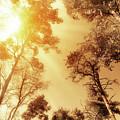 Sunlit Tree Tops by Wim Lanclus