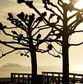 Sunrise Trees by Tom Rickborn