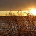 Sunset On Field by Christy Patino