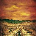 Sunset Over Vineyard by Jill Battaglia