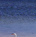 Sunshine Skyway Bridge With White Egret by Rose  Hill