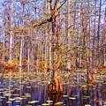 Swamp Tree by Susanne Van Hulst