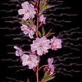 Sweet Smell Of Spring by Debra     Vatalaro